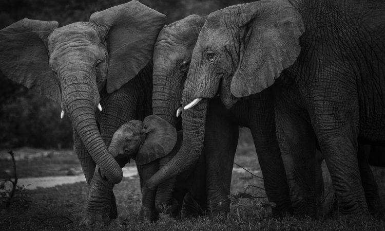 Idwala View, Accommodation, En-suite, Luxurious, Safari, Elephant Room Elephants