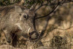 wildlife Idwala View, Self-Catering, 5 Star, Luxury Mabalingwe Lodge