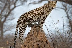 Idwala View, Accommodation, En-suite, Luxurious, Safari, Leopard Room Leopard